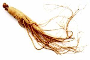 Gingseng Root