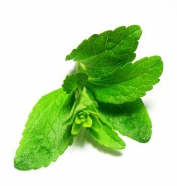 Sweet Herb